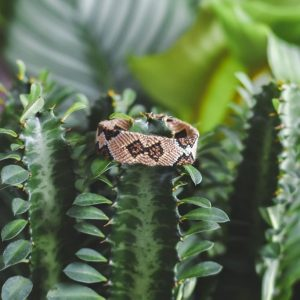 Bracelet Wayuu modèle Cobra